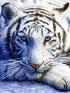 tiiggeriite