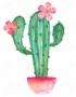 BloomingCactus
