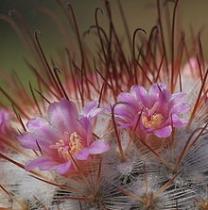 Kaktusadata